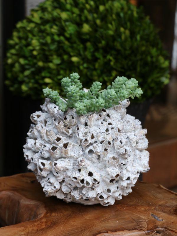 画像1: Coral Pot / コーラルポット[S-Type1] (1)